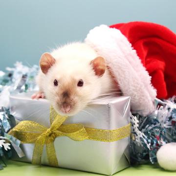 pest free christmas