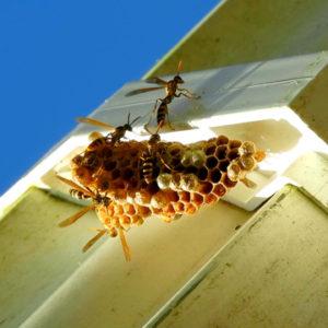 year round pest control