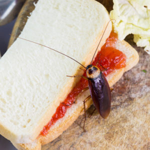 how pest can make your family sick