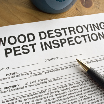 what is a termite letter
