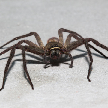 control spiders in home