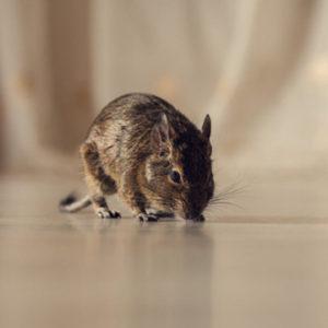 controlling mice